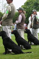 Dog Events